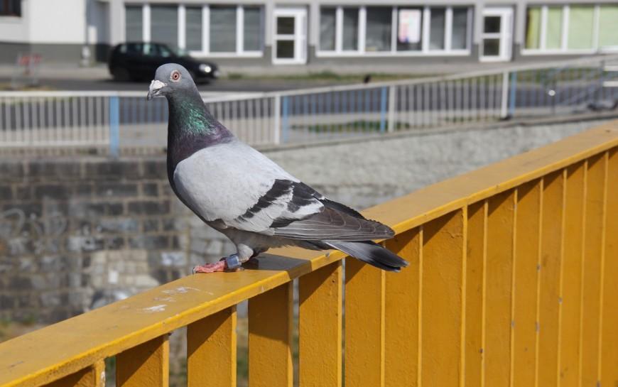 O czym myślą ptaki? Dowiesz się tego wsobotę wAkademii Rycerskiej